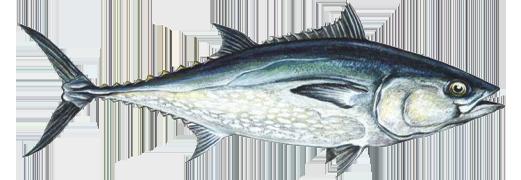 организация рыбалки на Кипре