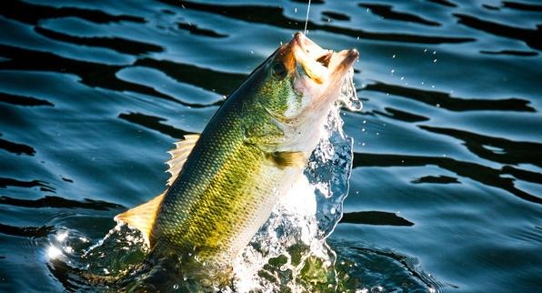 рыбалка на басса Кипр