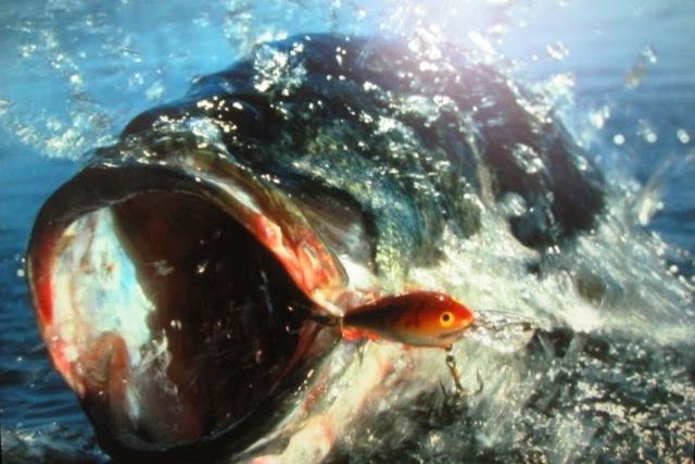 рыбалка на басса в Айя-Напе