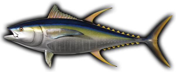 рыбалка на тунца в Средиземном море