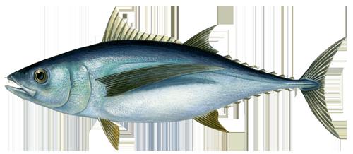 рыбалка в Лимассоле