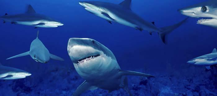 ловля акул на Кипре