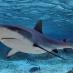 Спортивная ловля акул в Средиземном море