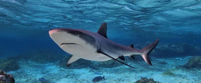 ловля белой акулы на Кипре