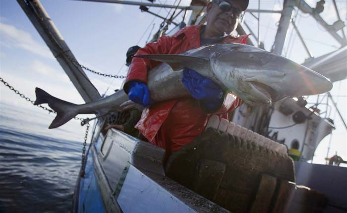 спортивная ловля акул Кипр