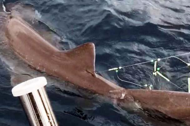 спортивная рыбалка на акул на Кипре