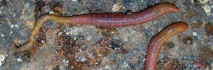морские черви для рыбалки на Кипре