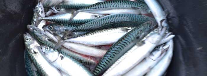наживка для морской рыбалки на Кипре