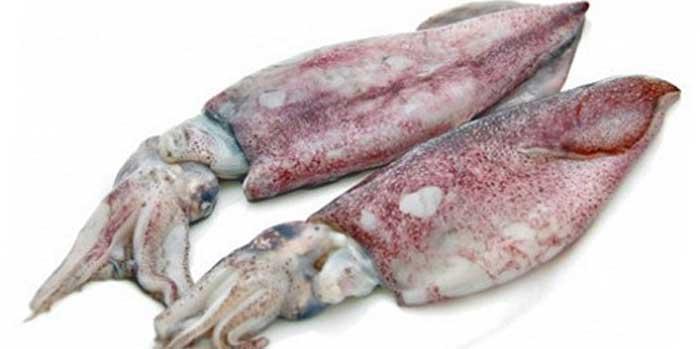 наживка кальмар для рыбалки на Кипре