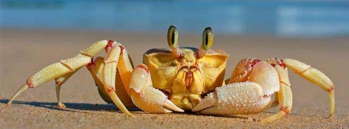 наживка краб для морской рыбалки на Кипре