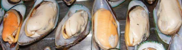 наживка мидия для морской рыбалки на Кипре