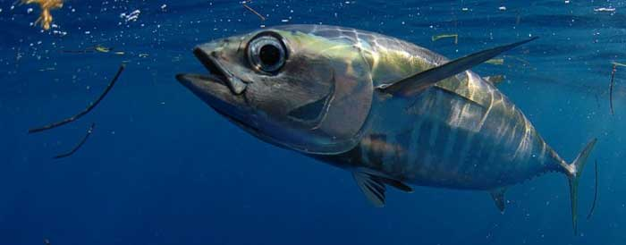 индивидуальная рыбалка на тунца Кипр