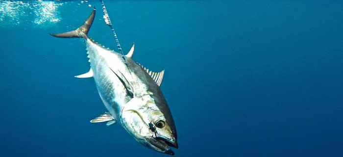 профессиональная рыбалка на тунца на Кипре