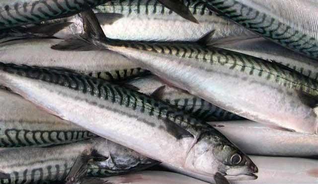 прикормка для ловли тунца Кипр