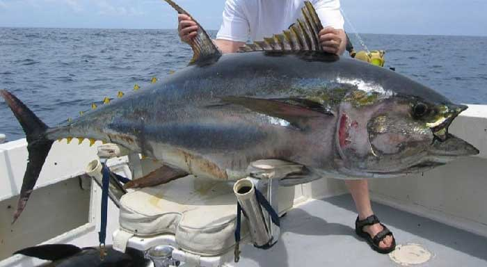 трофейная ловля тунца на Кипре