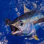 заказать рыбалку на тунца Кипр