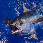 Как ловят тунца на Кипре?
