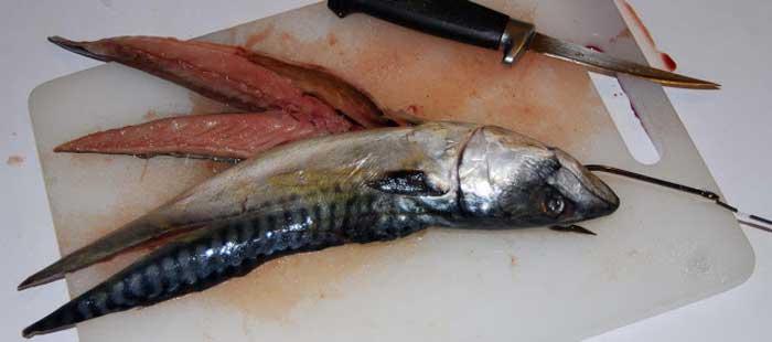 живая приманка для ловли тунца Кипр