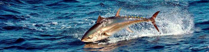 рыбалка на тунца Кипр
