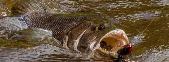 Трофейная рыбалка на басса