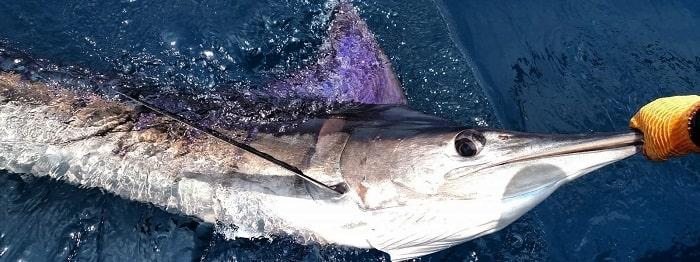 морская ловля Кипр