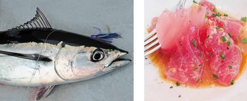 Морская рыбалка Пафос
